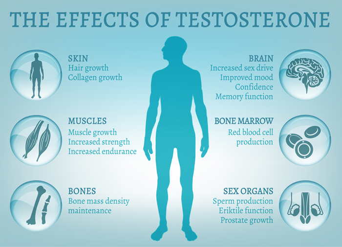 effects of testosterone